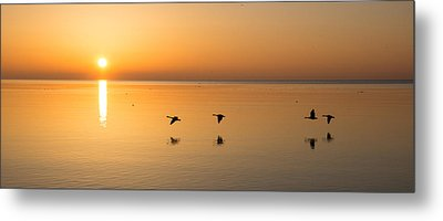 Metal Print featuring the photograph Wings At Sunrise by Georgia Mizuleva