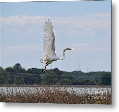 Metal Print featuring the photograph Wings by Carol  Bradley