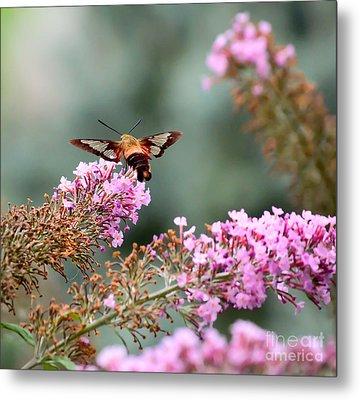Wings In The Flowers Metal Print by Kerri Farley
