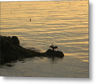Metal Print featuring the photograph Wings by Jean Goodwin Brooks