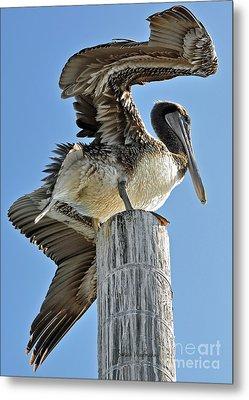 Wings Of A Pelican Metal Print by Susan Wiedmann