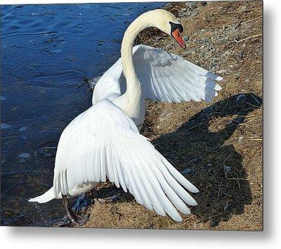 Wings Of A Swan Metal Print