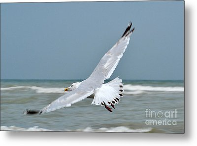 Metal Print featuring the photograph Wings Of Freedom by Simona Ghidini