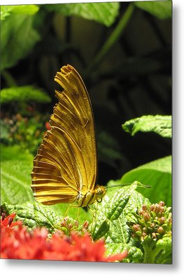 Wings Of Gold Metal Print by Jennifer Wheatley Wolf