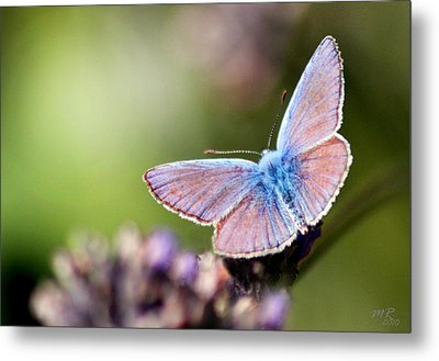 Metal Print featuring the photograph Wings Of Tenderness by Martina  Rathgens