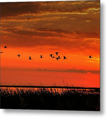 Wings On High Metal Print by Larry Trupp