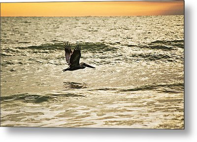 Wings Over Water Wil 270 Metal Print