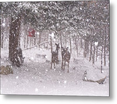 Winter 2014 Metal Print