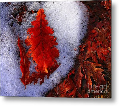 Winter 3  Metal Print by Vassilis Tagoudis