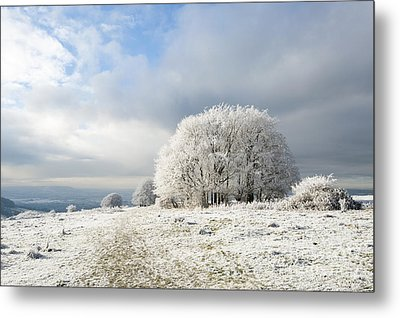 Winter Metal Print by Anne Gilbert