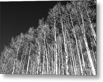 Metal Print featuring the photograph Winter Aspens by Roselynne Broussard