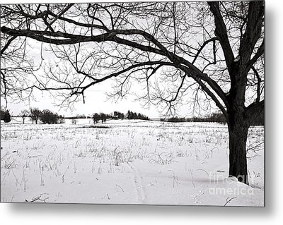 Winter At Valley Forge Metal Print by Olivier Le Queinec