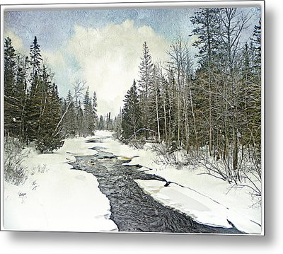 Winter Beauty  Metal Print by Dianne  Lacourciere