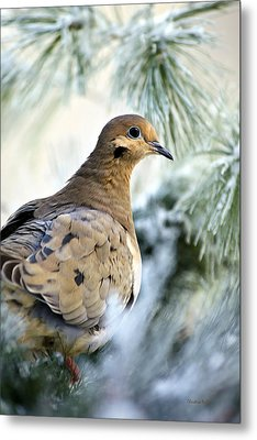 Winter Bird Mourning Dove Metal Print by Christina Rollo