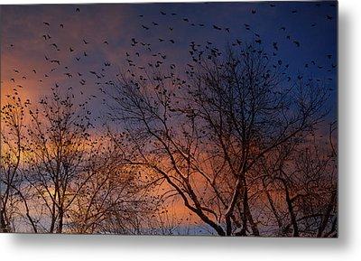 Winter Birds Metal Print by Utah Images