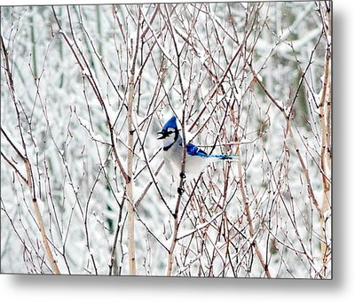 Winter Blues Metal Print by Karen Cook