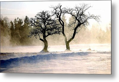 Winter Bluster Metal Print by Christopher Mace