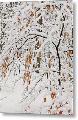 Metal Print featuring the photograph Winter Branches by Ann Horn