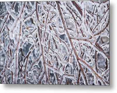 Winter Branches In Ice Metal Print by Elena Elisseeva