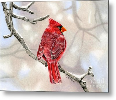 Winter Cardinal Metal Print by Sarah Batalka