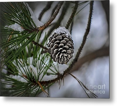 Metal Print featuring the photograph Winter Coat by Brenda Bostic