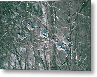 Winter Conference Metal Print by David Porteus