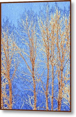 Winter Cottonwoods Abstract Metal Print by Will Borden