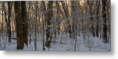 Winter Dawn Metal Print