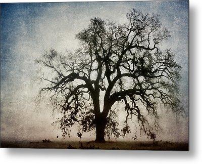 Winter Dawn Tree Silhouette Metal Print by Carol Leigh