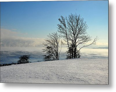 Metal Print featuring the photograph Winter Day by Randi Grace Nilsberg