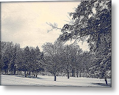 Winter Days Metal Print by Kay Novy