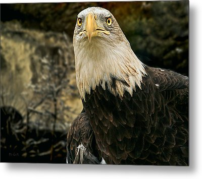 Winter Eagle Metal Print