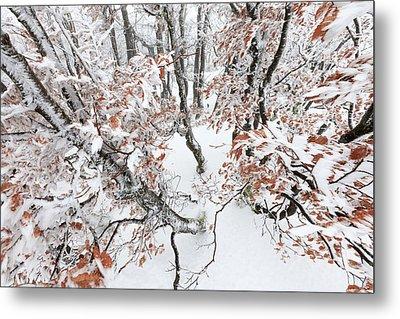 Winter European Beech Forest In Vosges Metal Print by Heike Odermatt