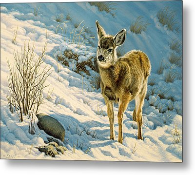 Winter Fawn - Mule Deer Metal Print