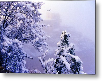 Winter Flight Of Raven Metal Print