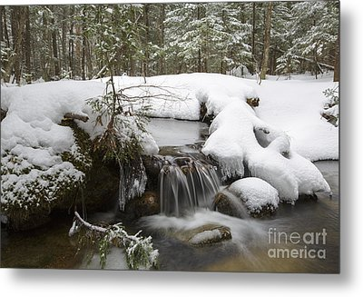 Winter Forest - Lincoln New Hampshire Usa Metal Print by Erin Paul Donovan