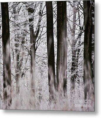 Winter Forest 1 Metal Print by Heiko Koehrer-Wagner