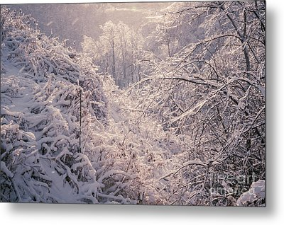 Winter Forest After Ice Storm Metal Print by Elena Elisseeva