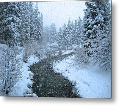 Winter Forest Metal Print by David Rucker