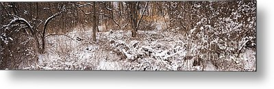 Winter Forest Panorama Metal Print by Elena Elisseeva