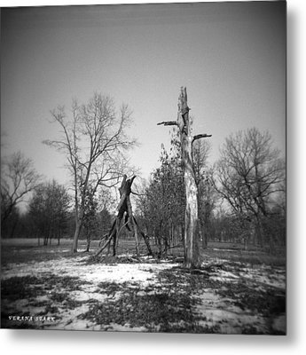 Winter Forest Series 4 Metal Print