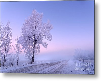 Winter Frost Metal Print