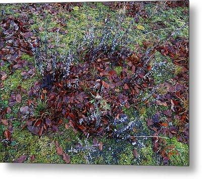 Winter Frost Peace Nature Denmark Metal Print by Colette V Hera  Guggenheim