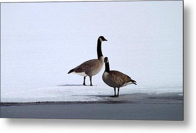 Winter Geese Metal Print by Michael Sokalski