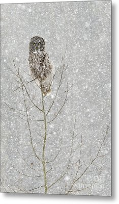 Winter Ghost Metal Print by Dee Cresswell