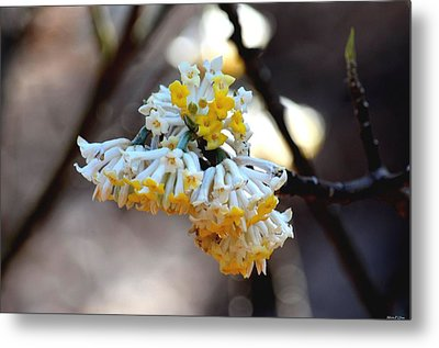 Winter Gold Metal Print by Maria Urso