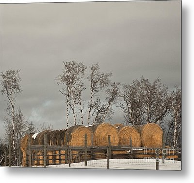 Metal Print featuring the photograph Winter Gold by Sandi Mikuse