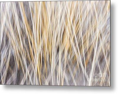 Winter Grass Abstract Metal Print by Elena Elisseeva