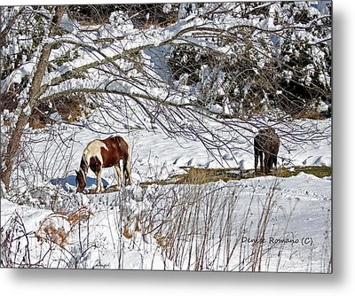Winter Graze Metal Print by Denise Romano