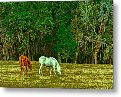 Winter Grazing In North Florida Metal Print